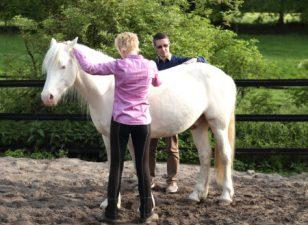 Pferdeosteopathie - Medica-Praxis und Med-Equin